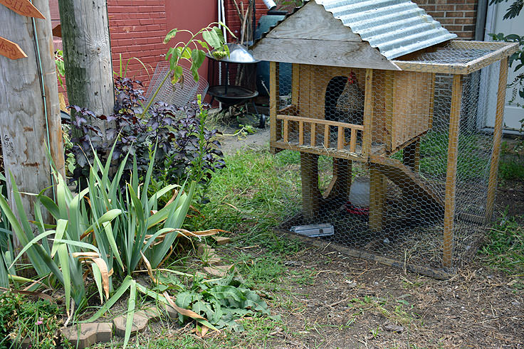 A chicken coop outside Port Discover in Elizabeth City, NC